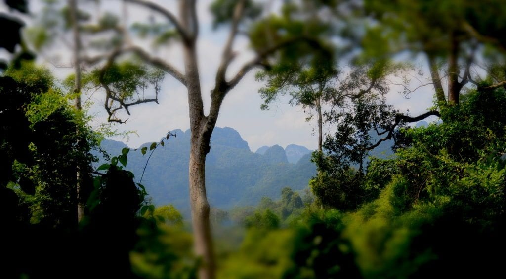 Khao Sok jungle trekking