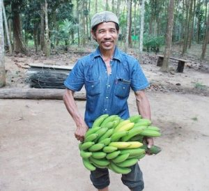 Khao Sok jungle cooking guide with bananas