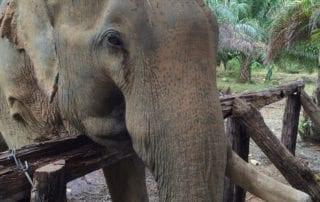 Khao Sok elephant Experience