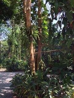 The lush green car park at Khao Sok Riverside Cottages