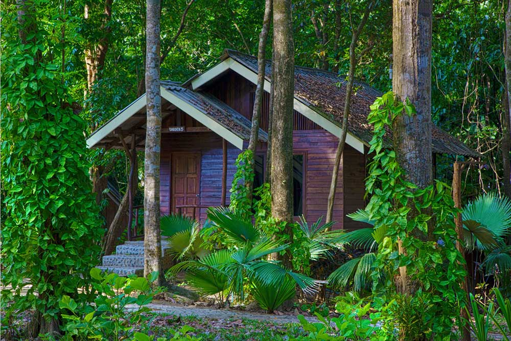 Khao Sok bungalow accommodation forest room