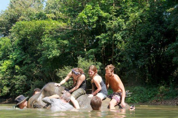 Khao Sok Thailand River Elephant