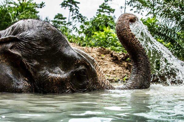 Khao Sok Thailand Elephant Bathing