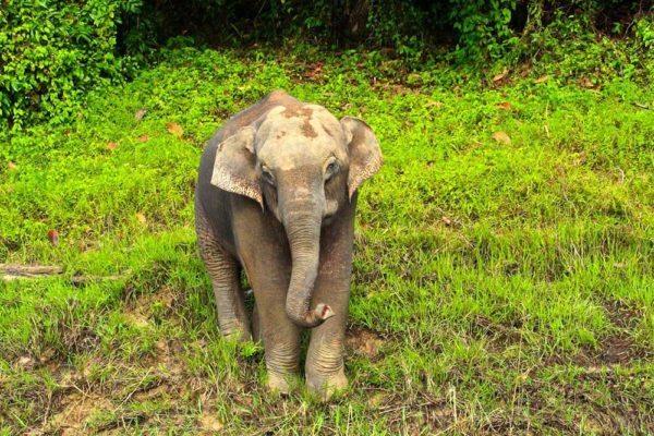 Khao Sok Lake Wild Elephant