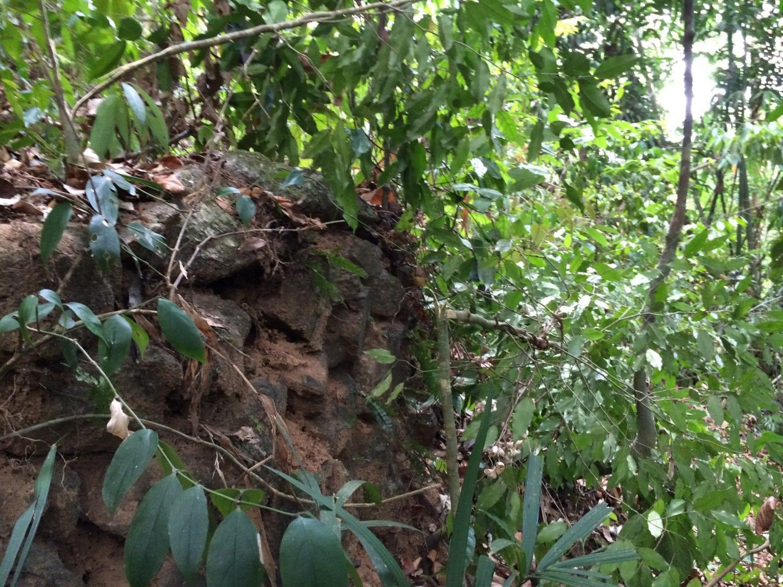 Khao Sok Jungle Camping - old road embankment