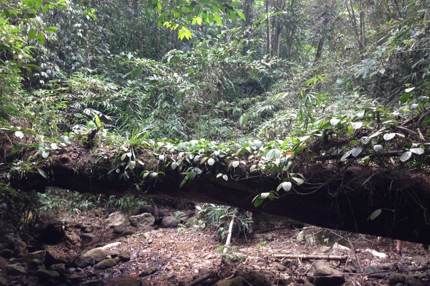 The dense forest of Khao Sok Park