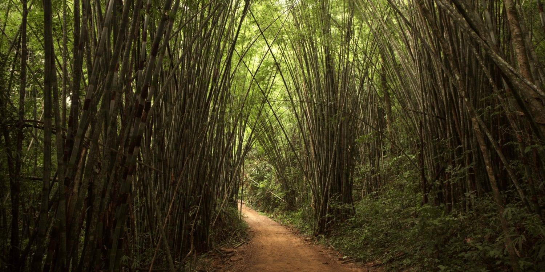 Khao Sok National Park Top Hikes- Riverside Cottages