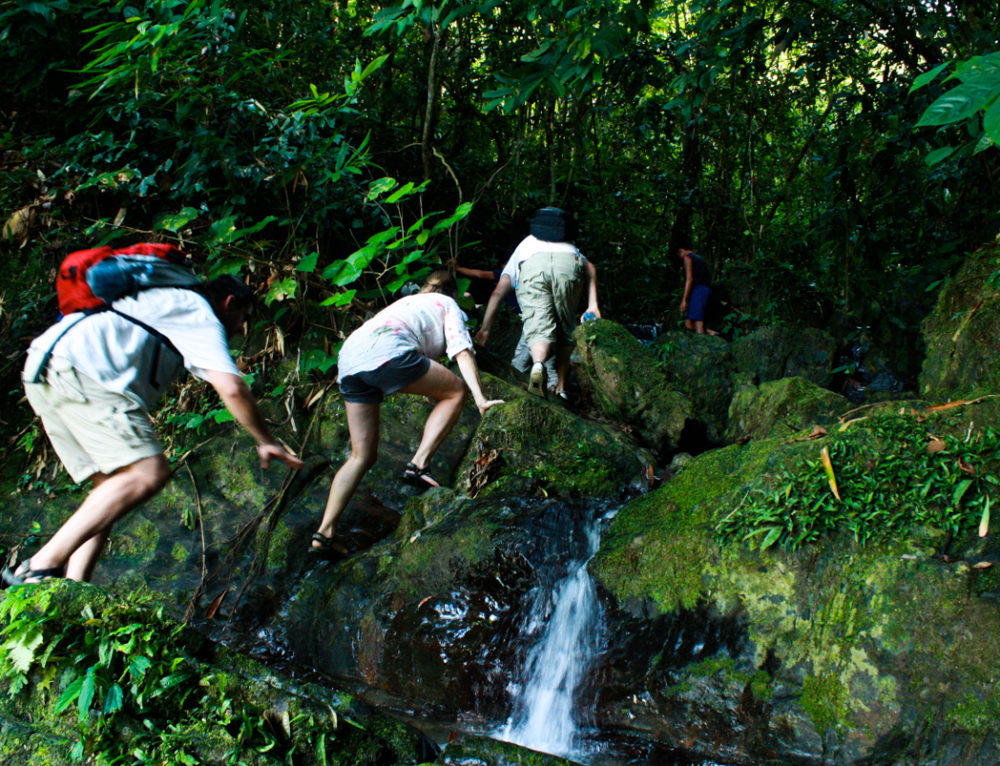 Hikers Paradise: Top 3 Hikes in Khao Sok Jungle