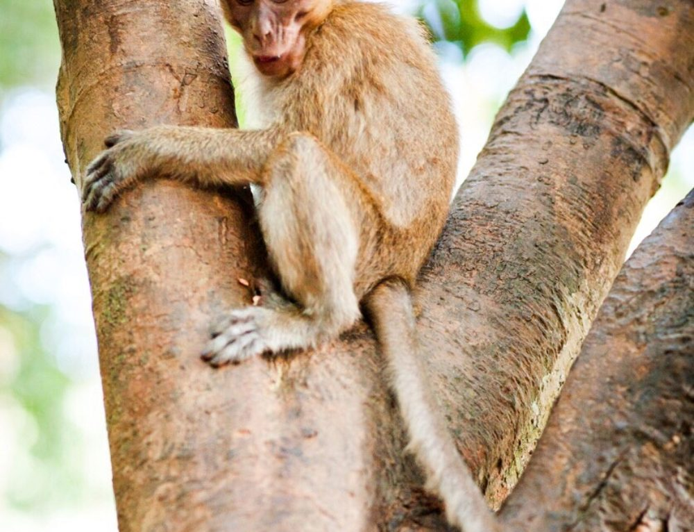 Khao Sok wildlife: A guide to the critters of the Riverside Cottages
