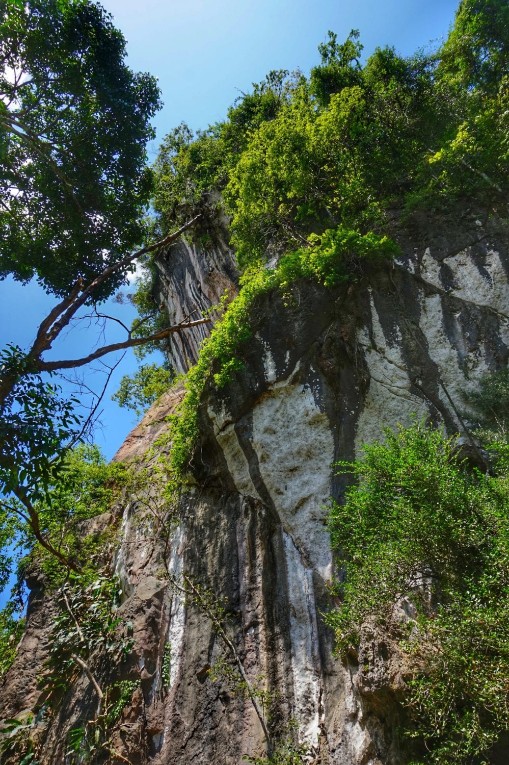 Khao Sok nature trail cliff face