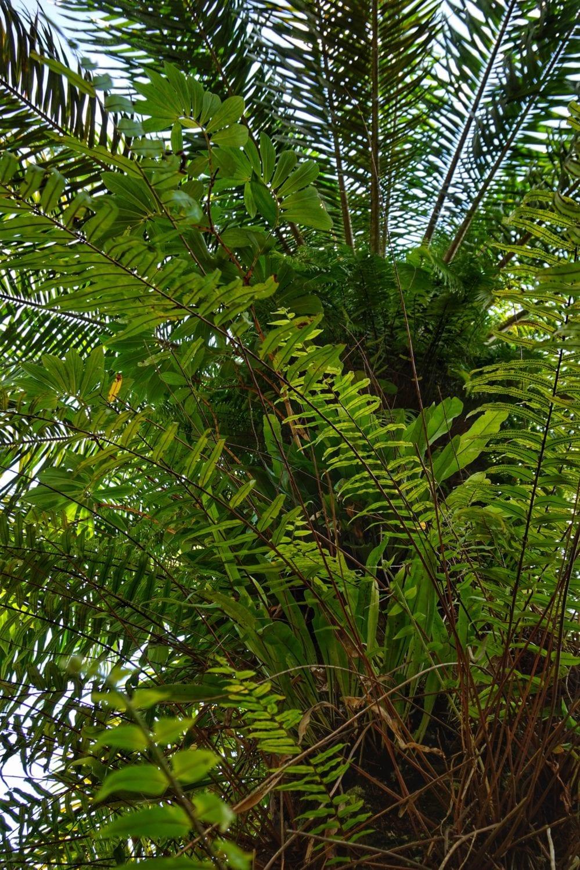 Khao Sok nature trail epiphytes