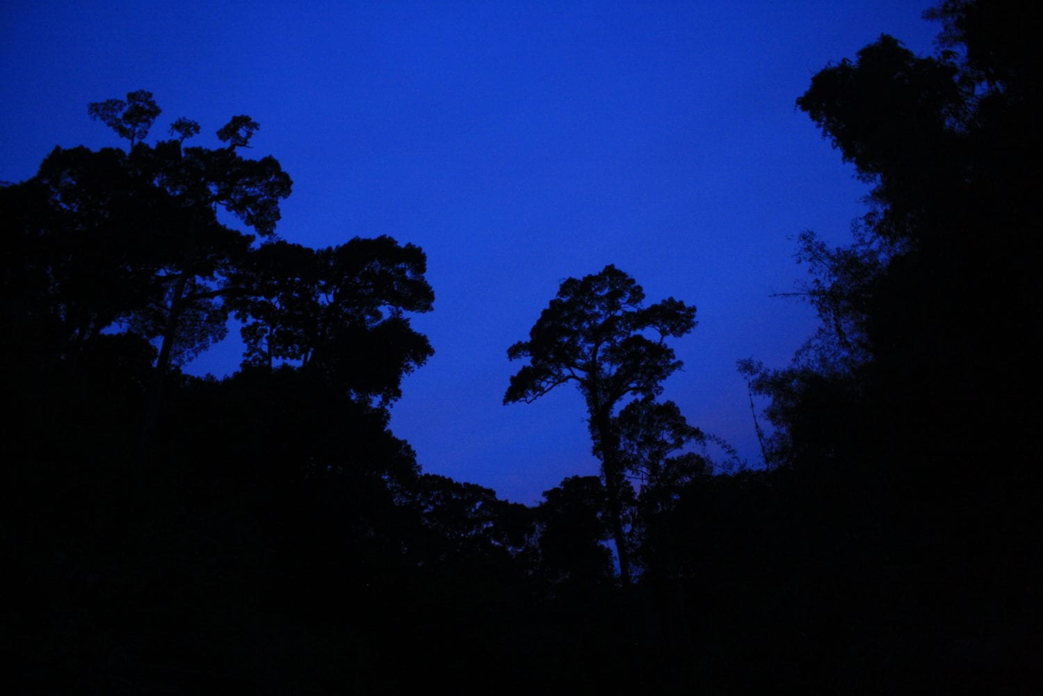 Khao Sok Night Safari treelike
