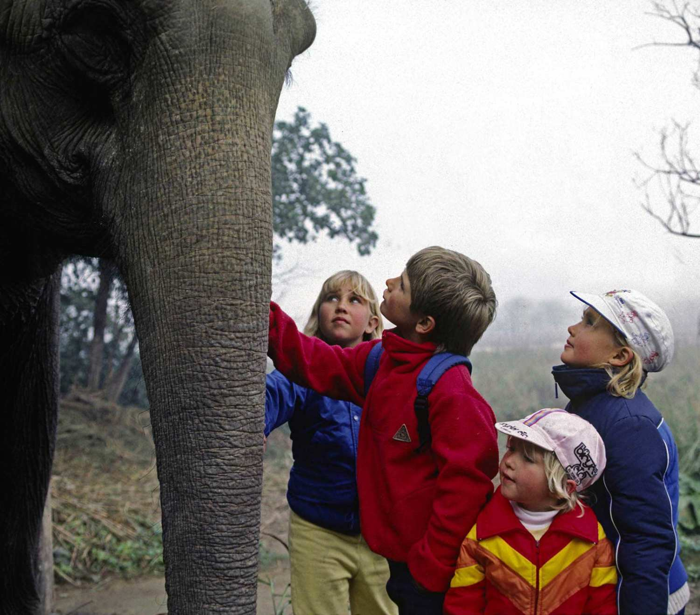 Asian elephant - Khao Sok national park elephant
