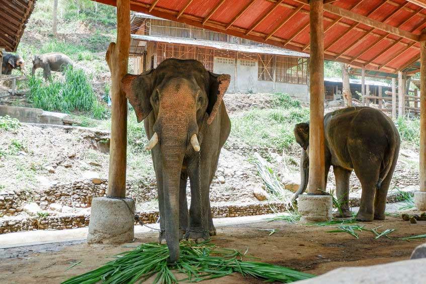 Elephant diet