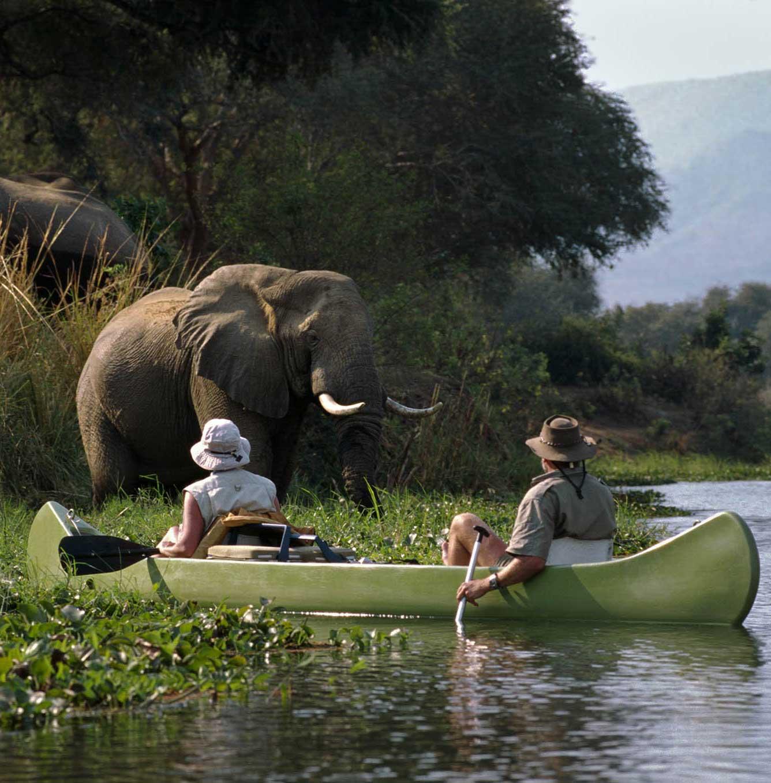 Elephant Facts