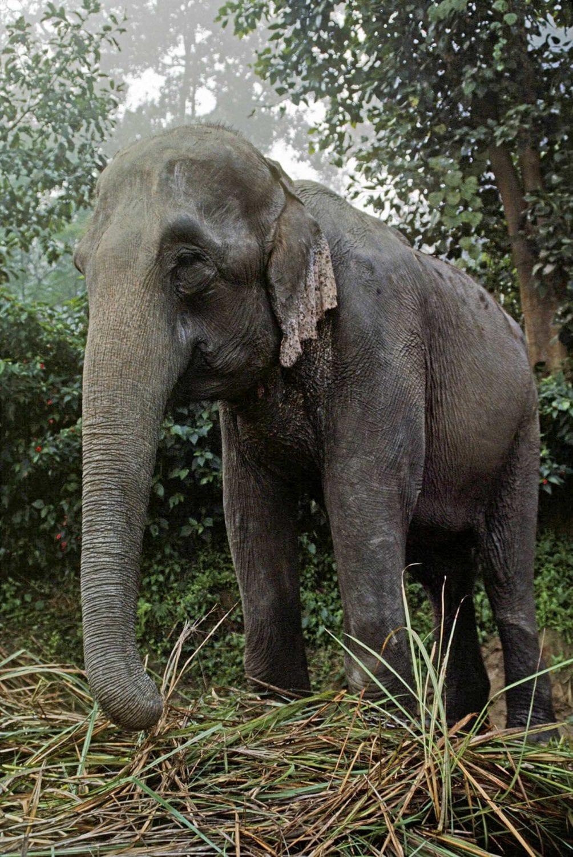 Khao Sok national park elephant