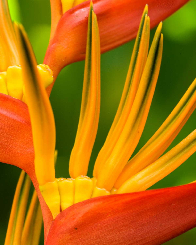 Koh Sok Flower