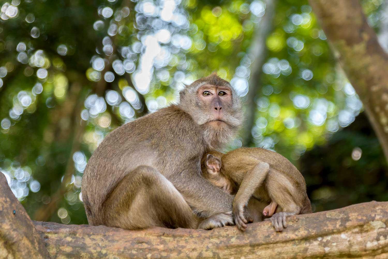 Wat Tham Phanthurat monkey temple