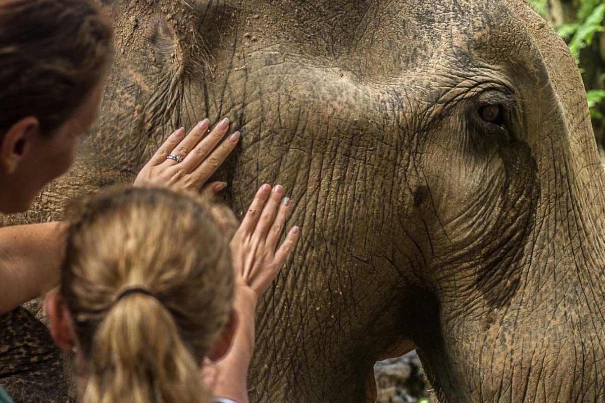 Family-friendly Kao Sok elephant sanctuary