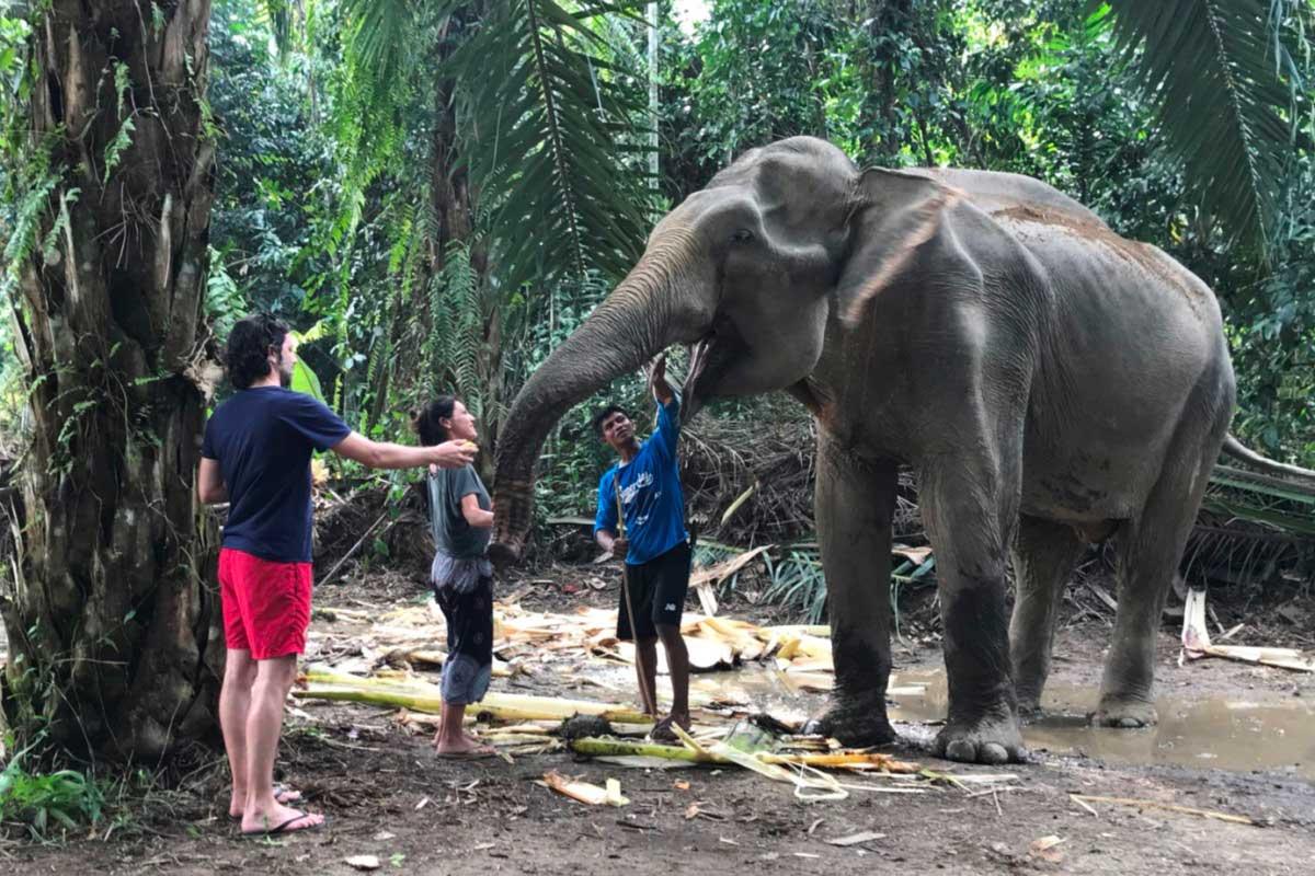 Khao Sok elephants