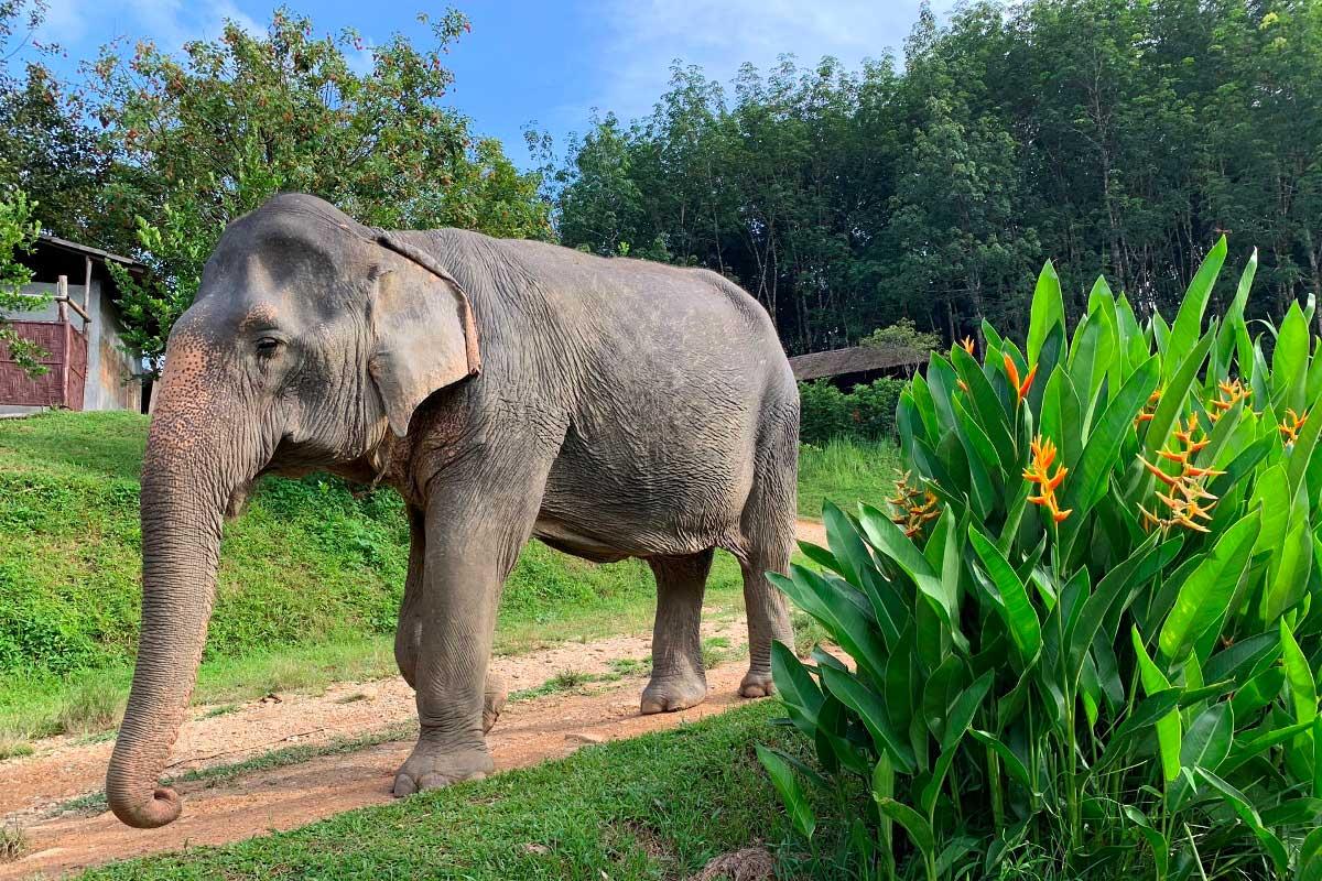 Thailand jungle tour to a Kao Sok elephant sanctuary